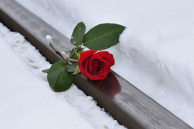 ружа-на-снегу