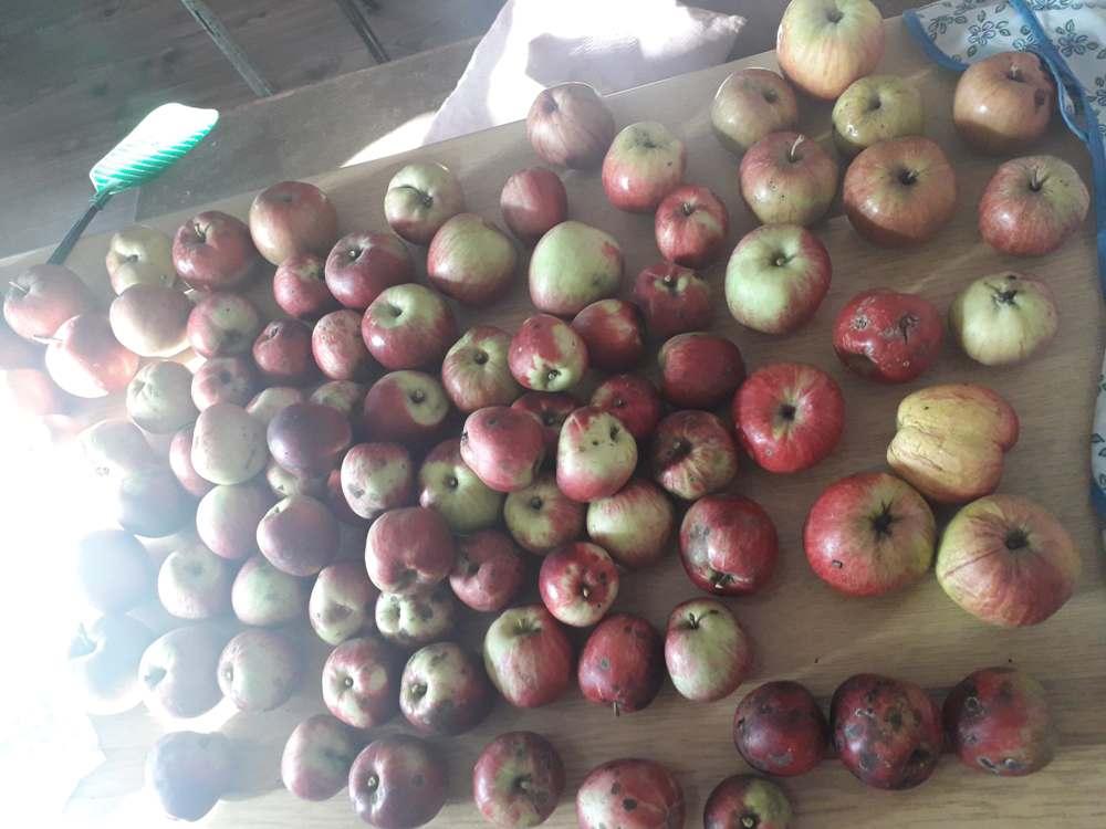 јабука