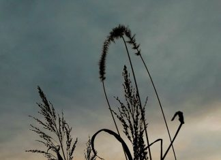 suton-trava