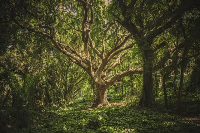 дрво-шума-храст