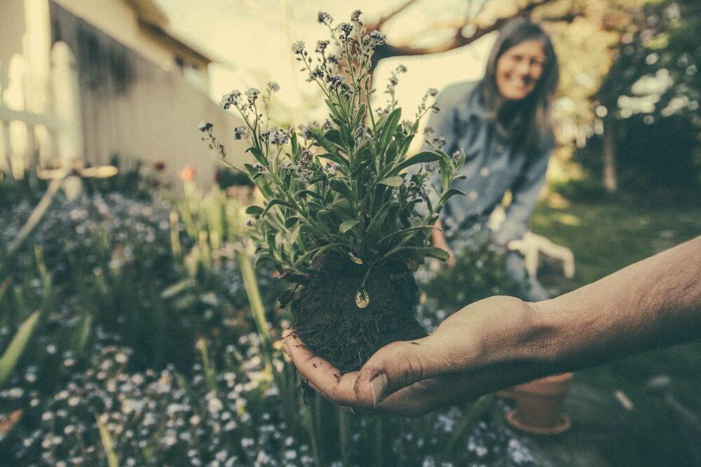 biljke-sadnja-bašta