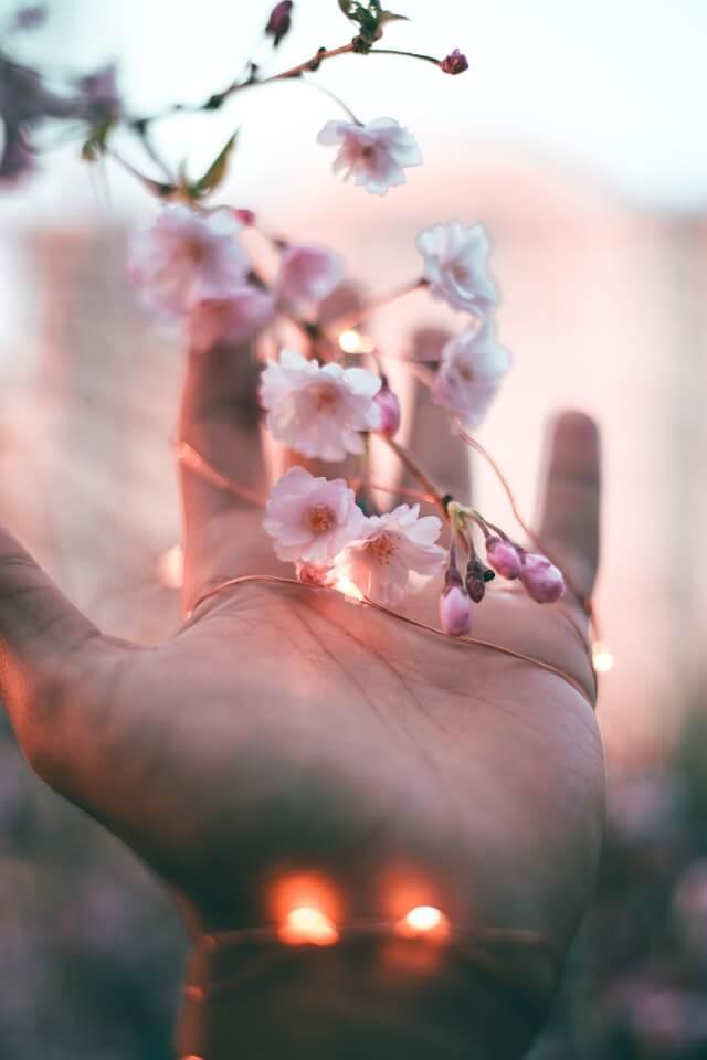 cvetići-dlan